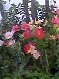 渋谷駅の花