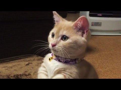 cat08-08