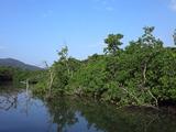 mangurobu