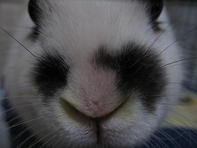 鼻黄色い?