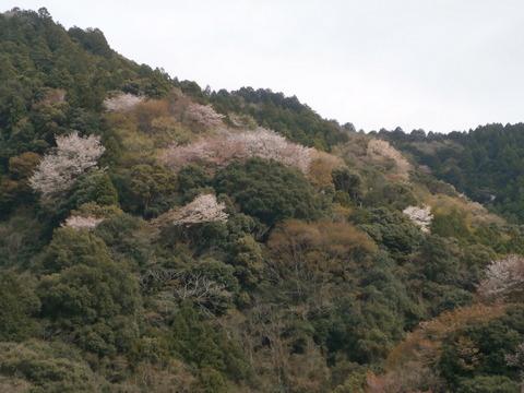 瀬戸谷 桜 (2)