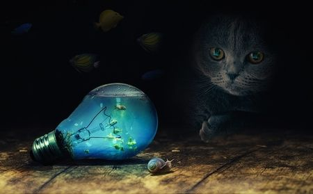 猫の不思議な話