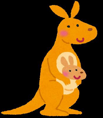 animal_kangaroo