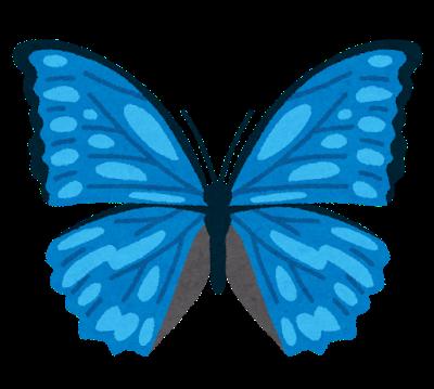 bug_morpho_chou