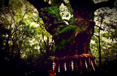 怖い話忌み木