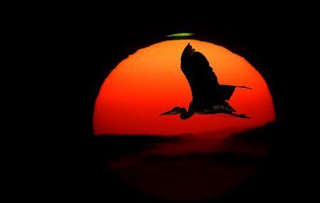 多摩川大きな鳥