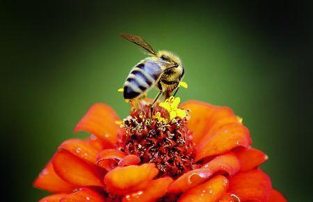 昆虫が絶滅する可能性