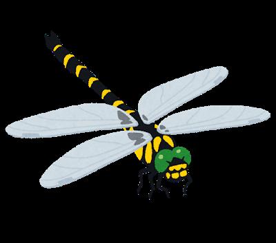 bug_tonbo_oniyanma
