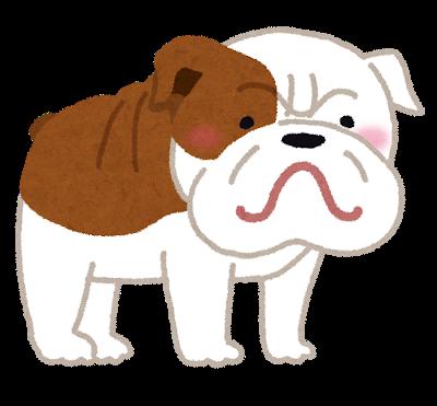 dog_bulldog