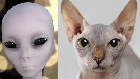 宇宙人 猫