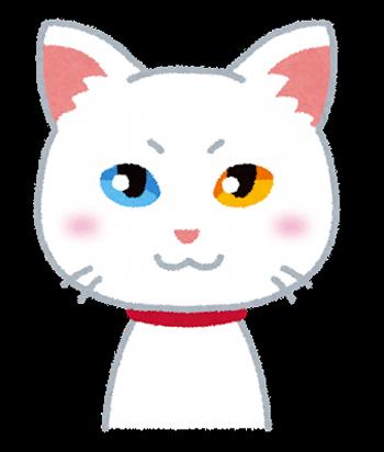 pet_cat_oddeye