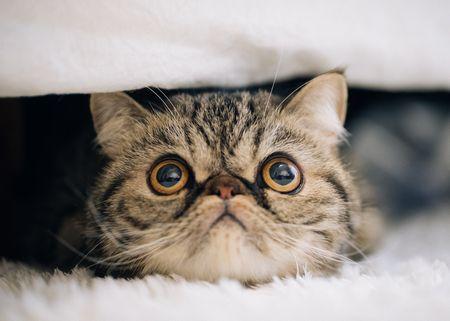 まばたきしない猫
