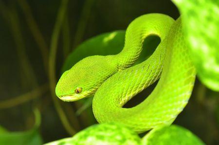 毒蛇の抗体を作った男