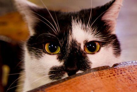 猫は霊感がある1
