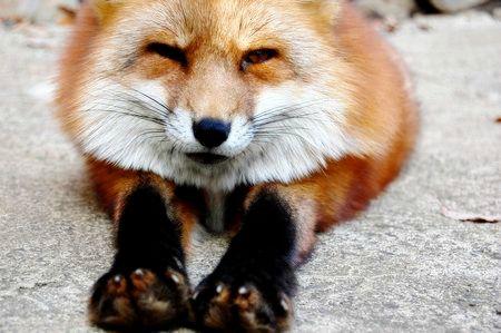 山の神様狐話