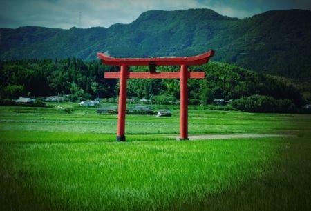 田んぼ神社