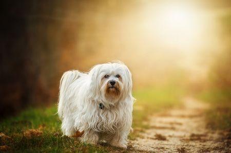 意識不明の弟を追い返す亡き愛犬の霊