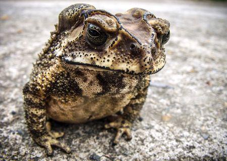 巨大小惑星の衝突後カエルが大繁殖