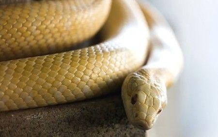 神社で白蛇を助けたら愛された話