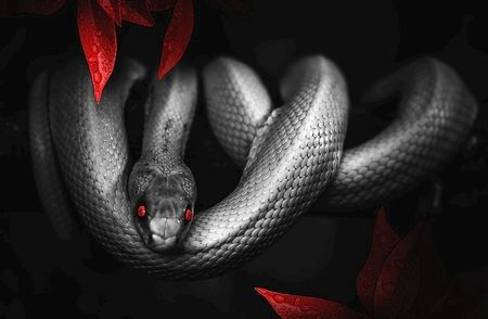 怖い話 蛇田
