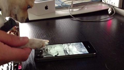 iPhone5sの指紋認証、猫に引き続き犬の足でも利用可能と判明