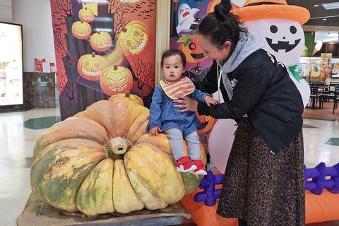 おばけかぼちゃ_砂川HO