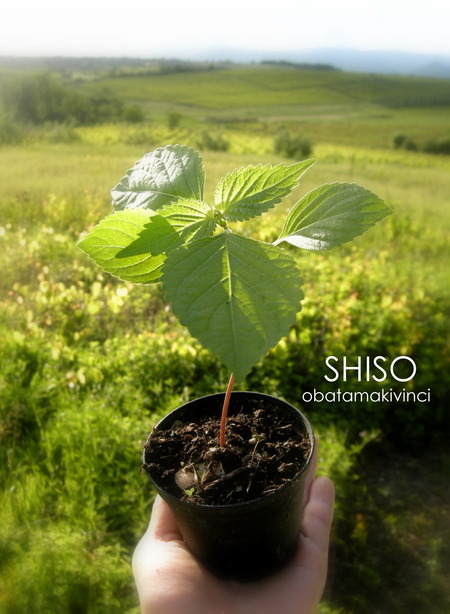 SHISO 2018