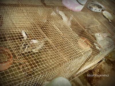 Conigli nella Stalla