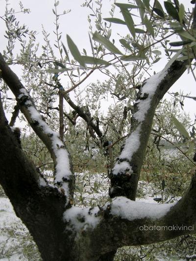 Tronco di Olivo con la Neve