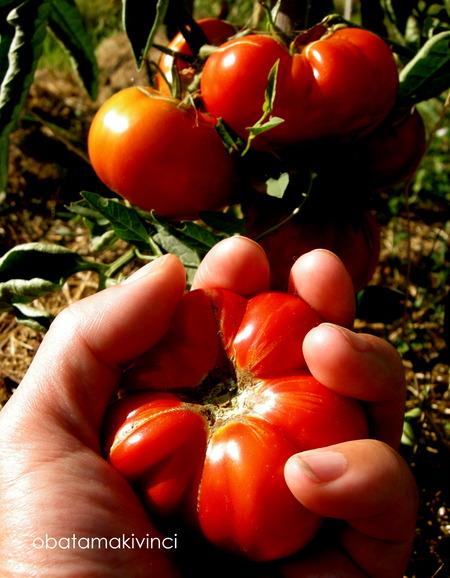 pomodoro nella mano