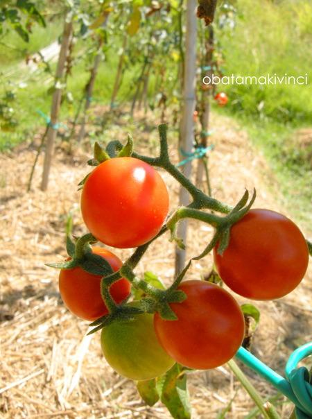 Pomodori mini