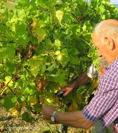 una controllata di uva
