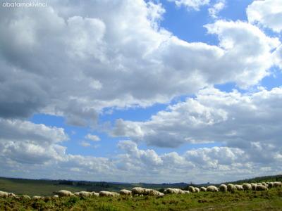 Pecore e Cielo