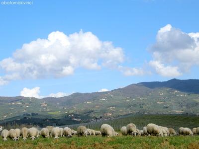 Pecore e Vinci