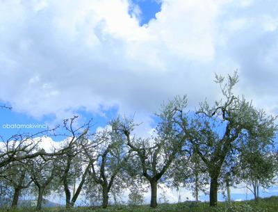 Olivi Potati con Nuvola