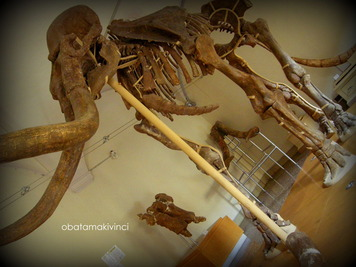 Mammut di Barberino