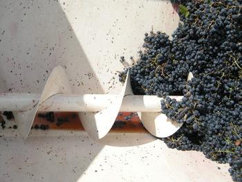 Uva in Carrello