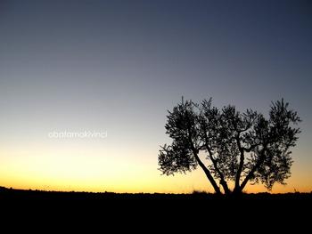 Olivo sul'Orizzonte