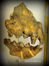 Denti di Iena