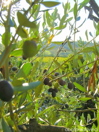 Olive in alto con Panorama