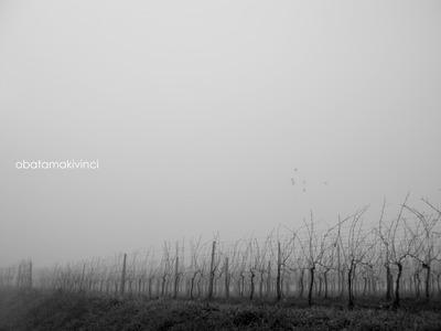 Vigna nella Nebbia