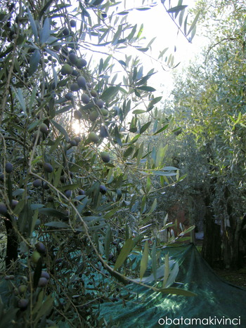 Bosco degli Olivi