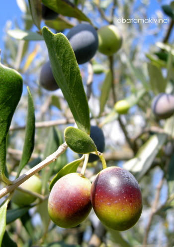 Invaiatura di Olive