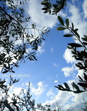 Cielo con Olivo