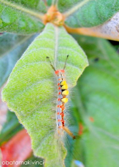 un verme colorato sulla foglia di nespolo