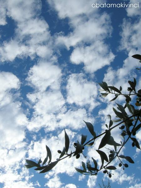 Cielo e Olivo con Olive