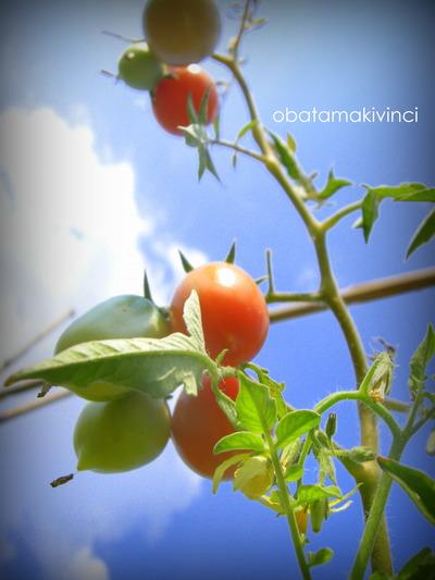 Pomodori di Settembre