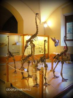 Paleontologia Internazionale