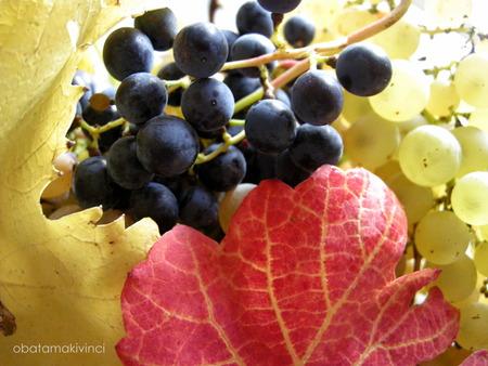 ultime uva