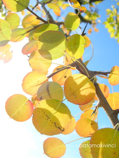 Foglie di Pera in autunno